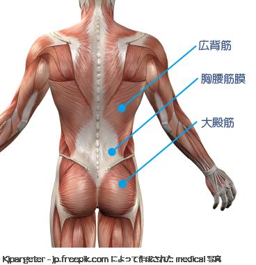 垂水区-かわかみ整形外科クリニック【腰痛(筋・筋膜性腰痛症)とは ...